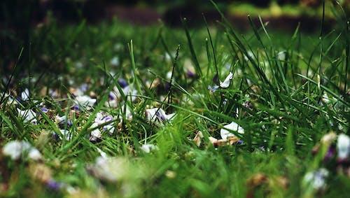Ilmainen kuvapankkikuva tunnisteilla jousi, kukka terälehtiä, lähikuva, luonto