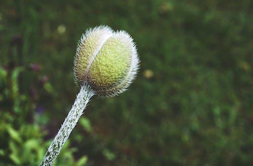 Ilmainen kuvapankkikuva tunnisteilla kasvit, kukat, luonto, puuro