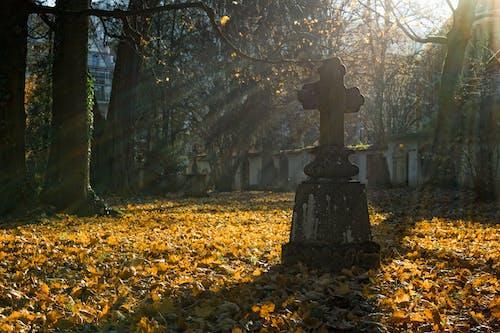 Photos gratuites de arbres, branches, cimetière, croix