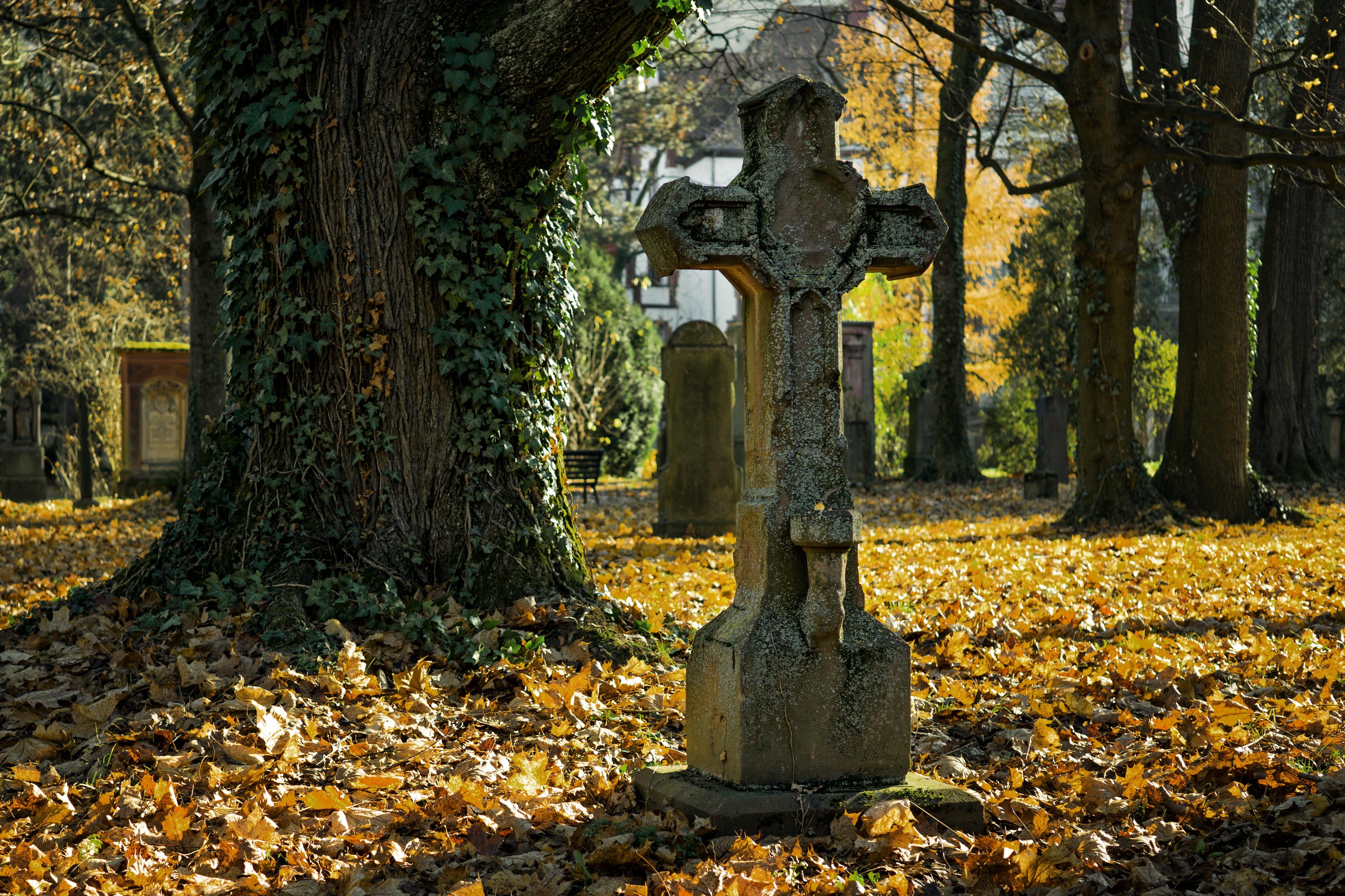 Gray Cross Statue Near Tree