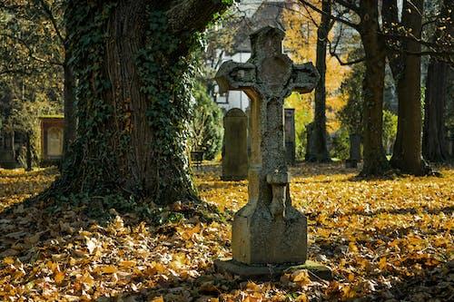 Foto d'estoc gratuïta de arbres, baguls, cementiri, colors