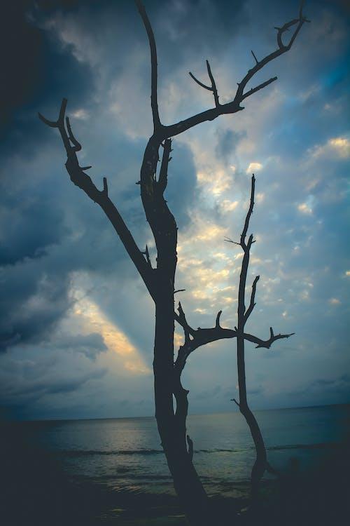 Безкоштовне стокове фото на тему «абстрактне фото, відтінок, водні рослини, краса в природі»