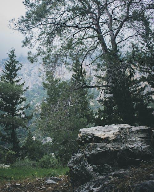 Бесплатное стоковое фото с ветви, гора, деревья, дневной свет