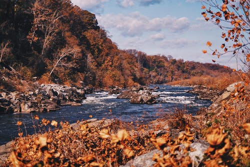 갈색 나무 사이 강