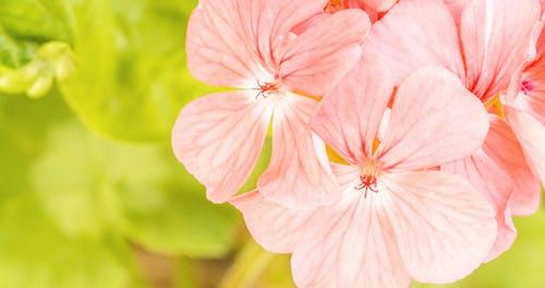 Ilmainen kuvapankkikuva tunnisteilla Ensimmäiset kukat, kaunis kukka