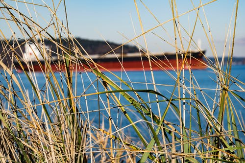 Free stock photo of cargo ship, ship, tall grass, waterfront