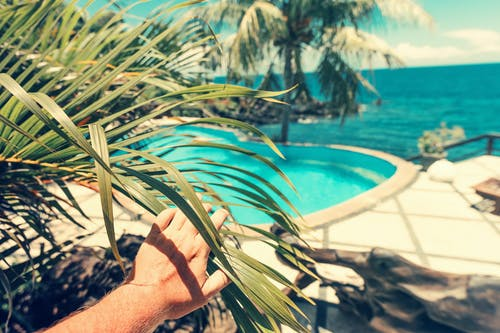 Photo of Person Touching Palm Leaves