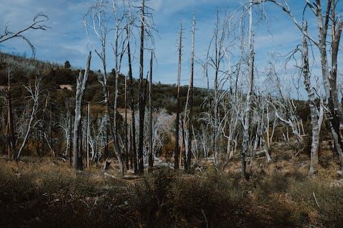 Безкоштовне стокове фото на тему «cuyamaca rancho, голі дерева, дерева, Захід»