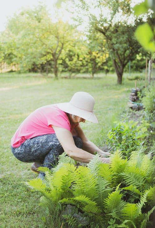 休閒, 修剪花草, 女人, 蹲 的 免费素材照片