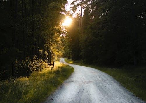 빈 도로, 숲, 자갈길, 잔디의 무료 스톡 사진