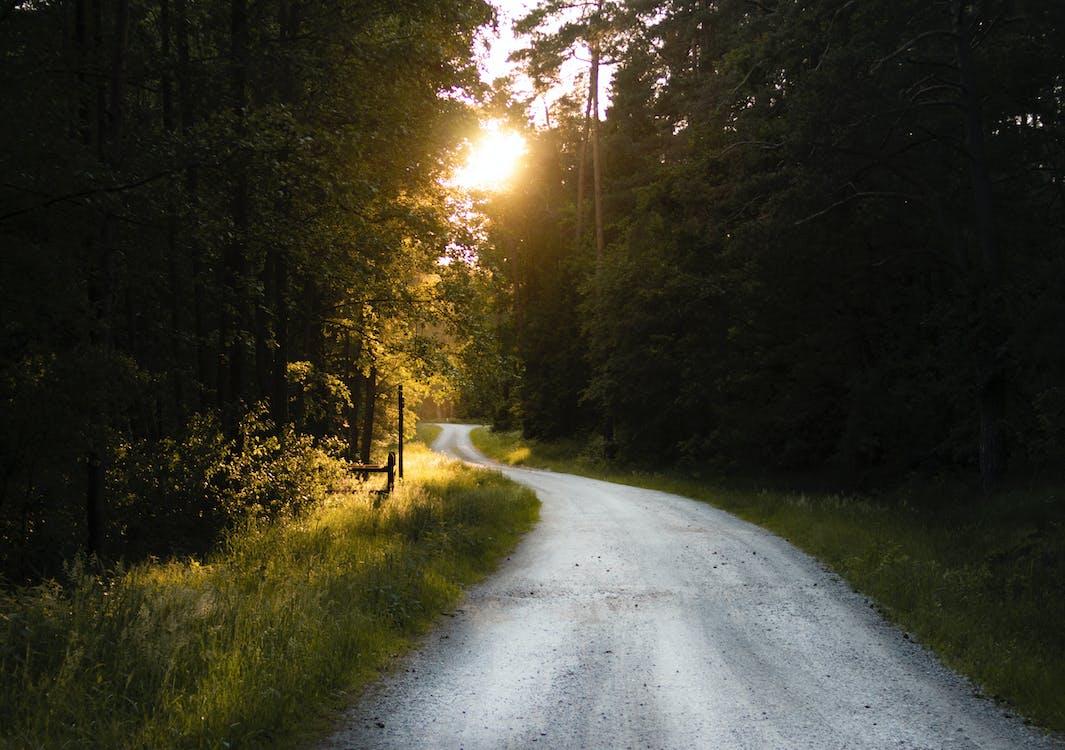 Photo of Empty Gravel Road Between Trees