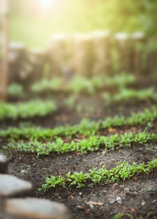 Green Plants on Ground