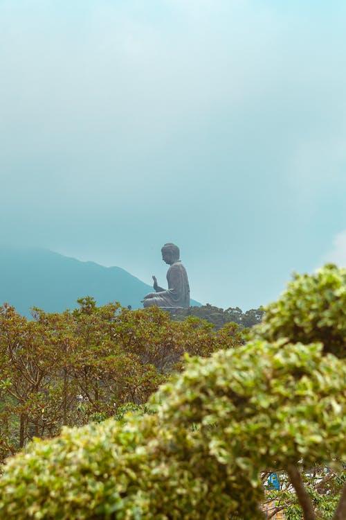Darmowe zdjęcie z galerii z budda, chiny, drzewo, góra