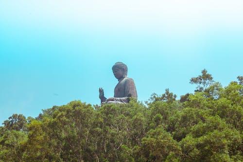 땅, 부처, 산, 숲의 무료 스톡 사진