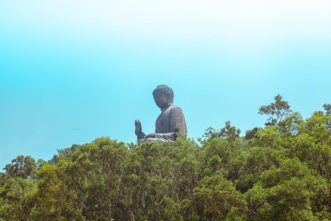 arbre, bouddha, chine