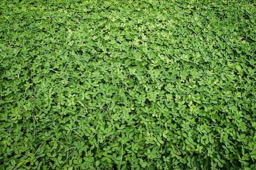 Foto stok gratis hijau, kehidupan