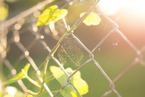 Photos gratuites de arrière-plan, barrière, clôture grillagée, contraste