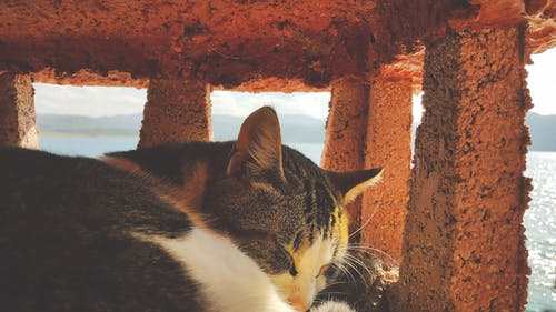 Free stock photo of cat sleeping
