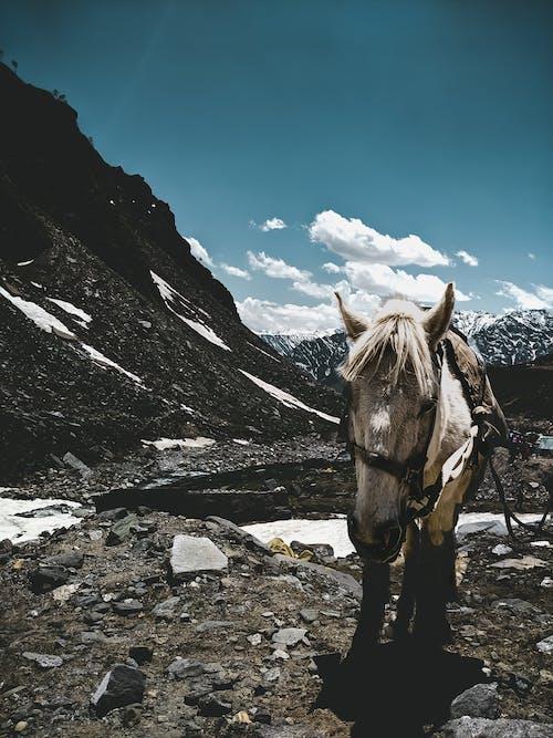 Immagine gratuita di bellezza nella natura, cavallo, cielo azzurro