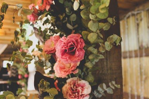 Free stock photo of flower arrangement, pink, pink flower