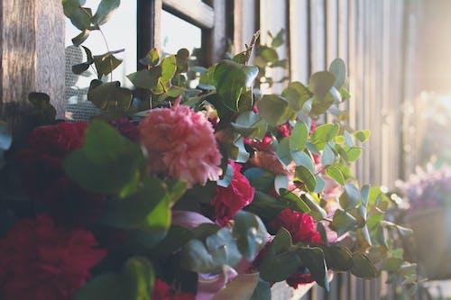 Free stock photo of flower arrangement