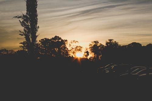 Free stock photo of evening sun, orange skies