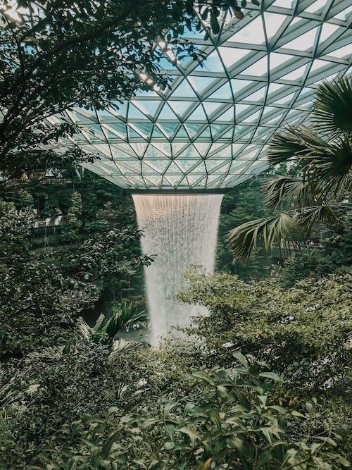 人造的, 公園, 天性, 天花板 的 免费素材照片