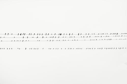Foto profissional grátis de empoleirado, linhas de cabo, passarinhos