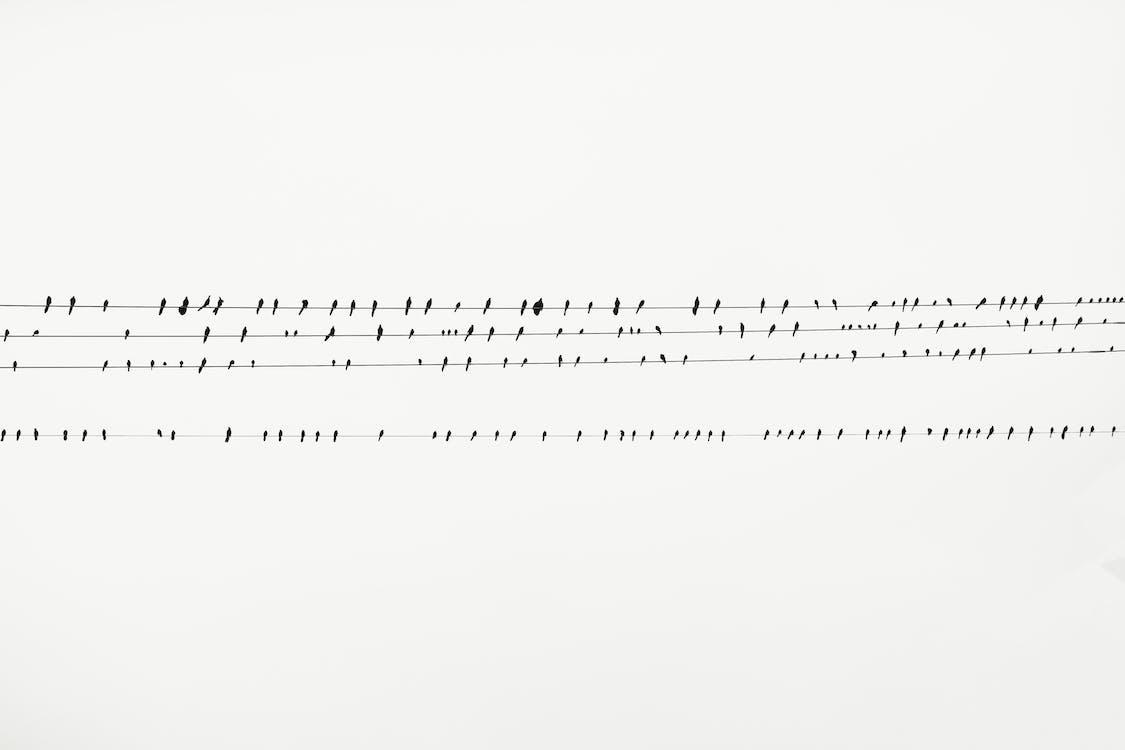empoleirado, linhas de cabo, passarinhos