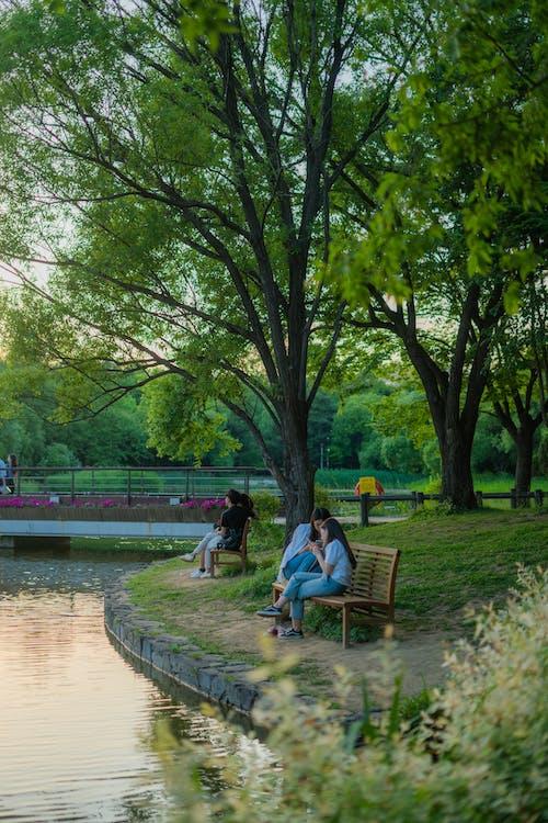 Foto stok gratis alam, danau, di luar rumah, hutan