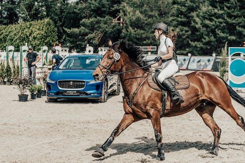 Foto d'estoc gratuïta de atleta, cavall, cavall de carreres, ciclista