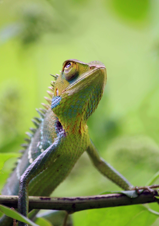 Gratis lagerfoto af camouflage, close-up, dyr, dyreliv