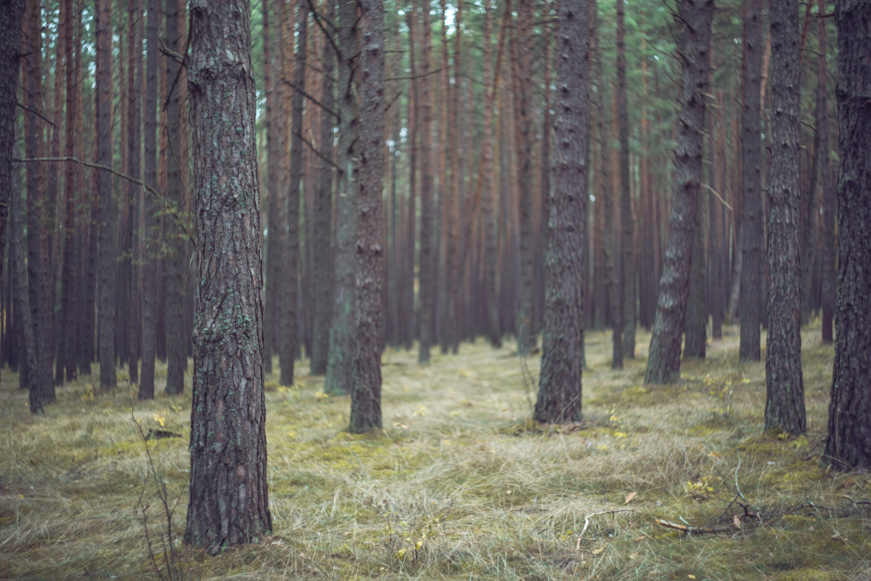 bunch, colors, conifer