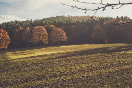 Free stock photo of landscape, nature, space, field