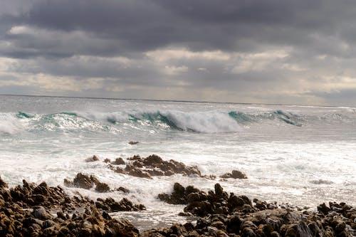 Kostnadsfri bild av fiskmåsar, hav, havscape, havspruta