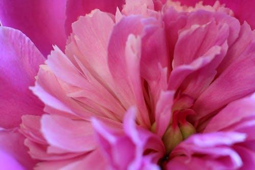 Fotobanka sbezplatnými fotkami na tému červená, farba, farby, krásny kvet