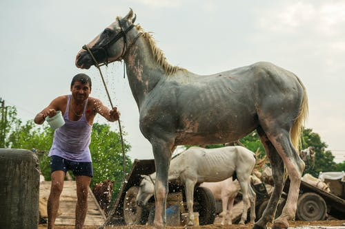 açık hava, adam, atlar, aygır içeren Ücretsiz stok fotoğraf