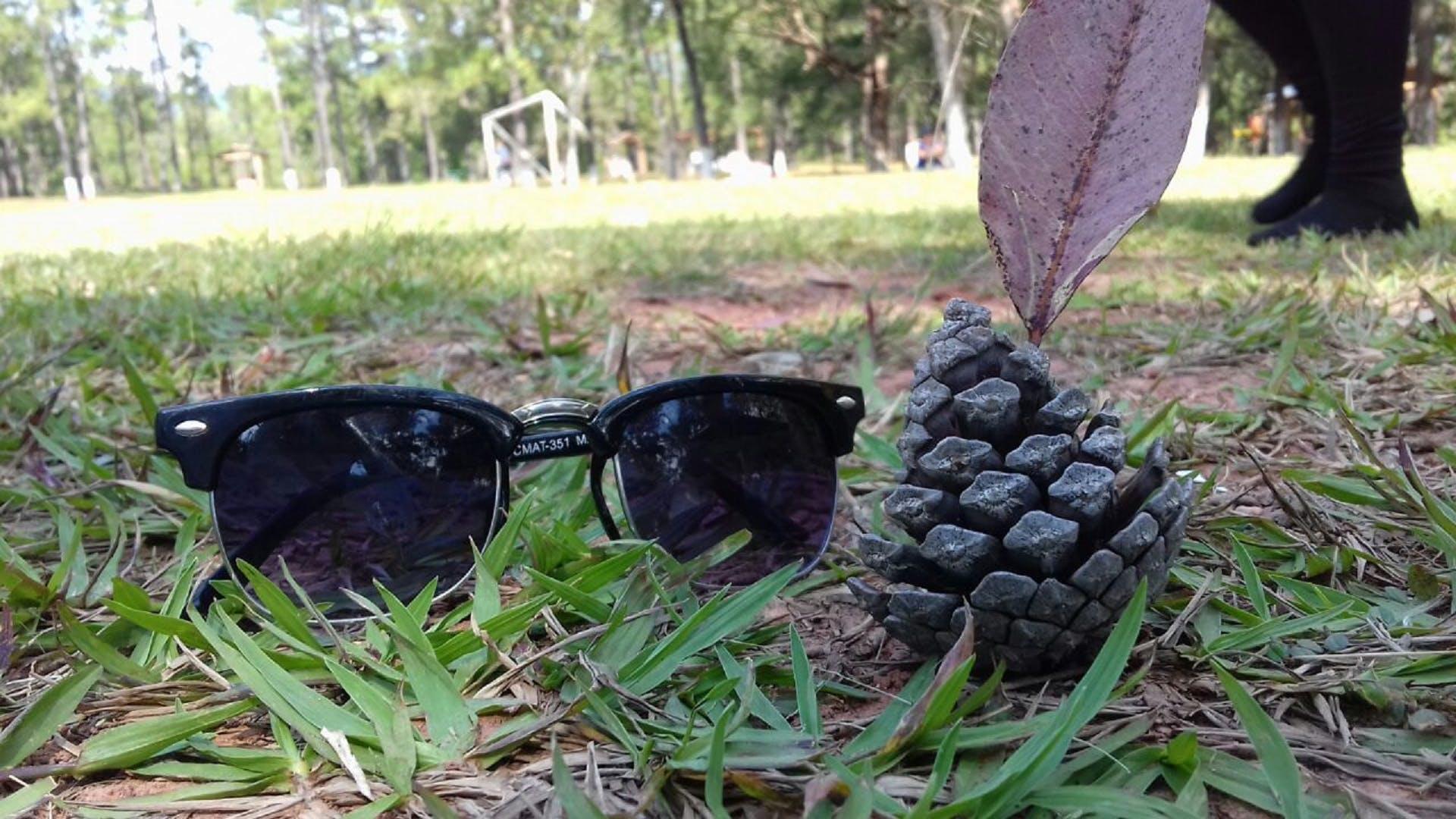 Základová fotografie zdarma na téma fotografie přírody, park, piknik, příroda