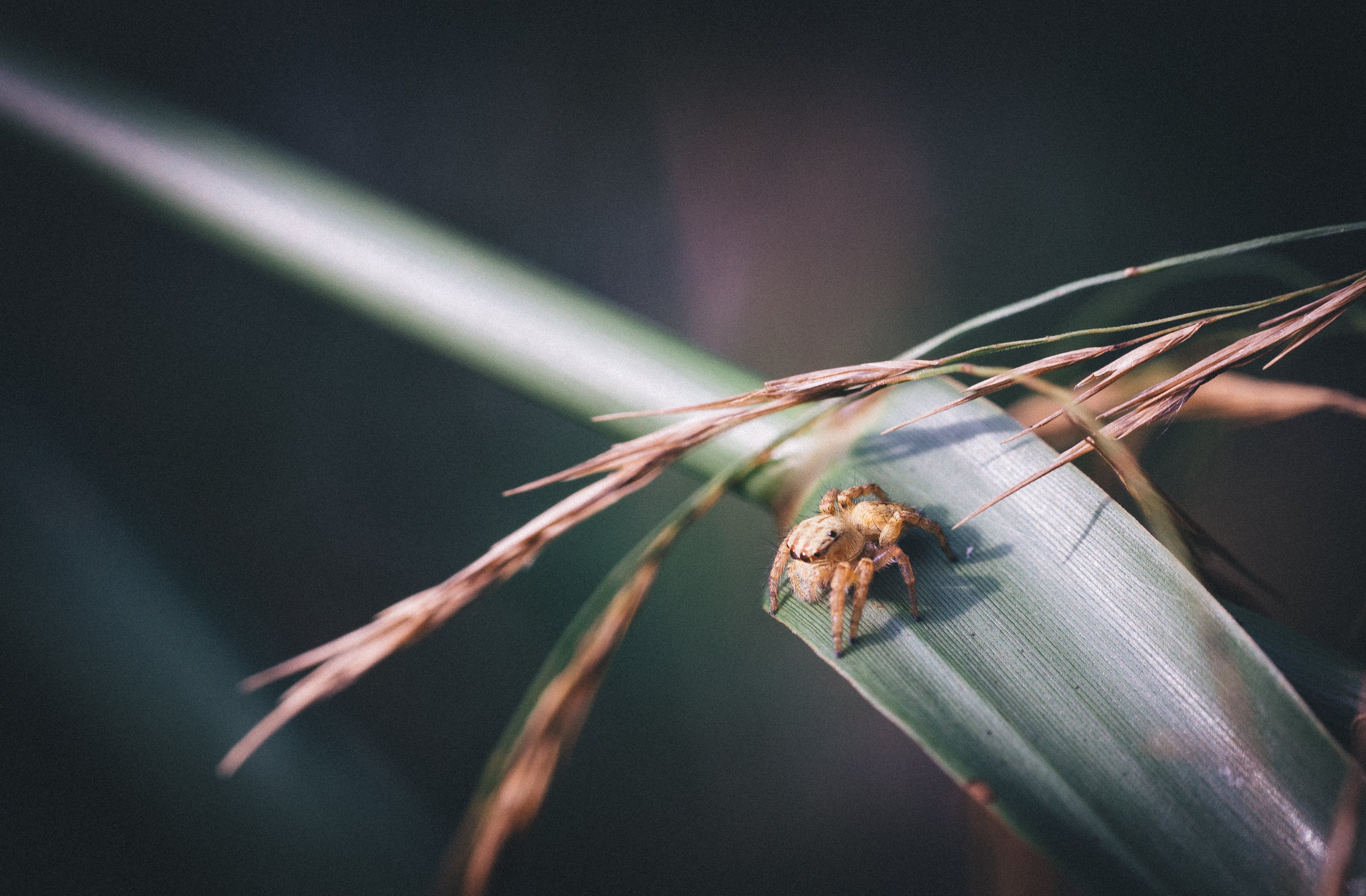 Selective Focus Photography Brown Jumping Spider on Grass