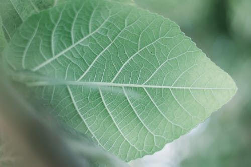 Focus Photography of Green Leaf