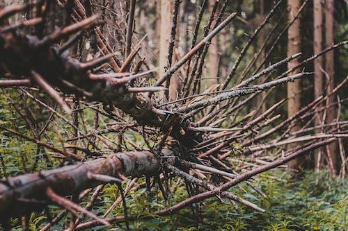 Бесплатное стоковое фото с ветви, деревья, дикий, дневной свет