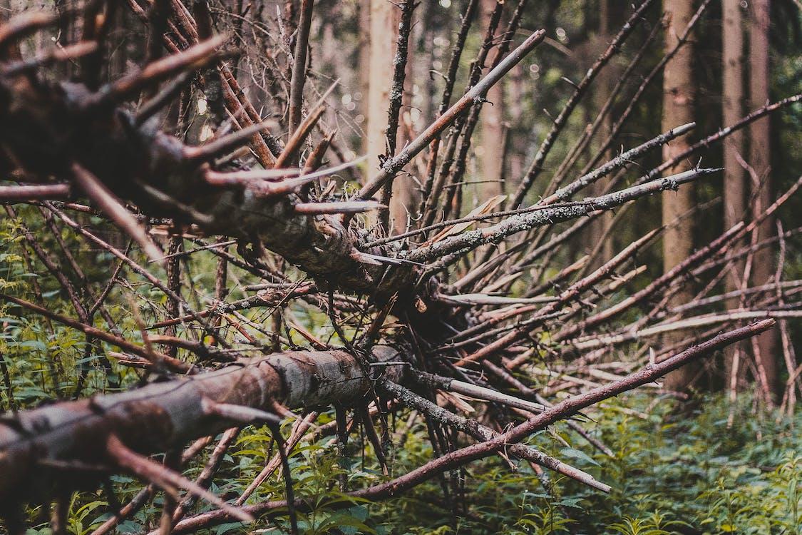 afilat, arbres, bosc