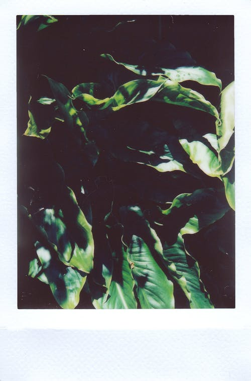 Immagine gratuita di arte, crescita, esterno, film istantaneo