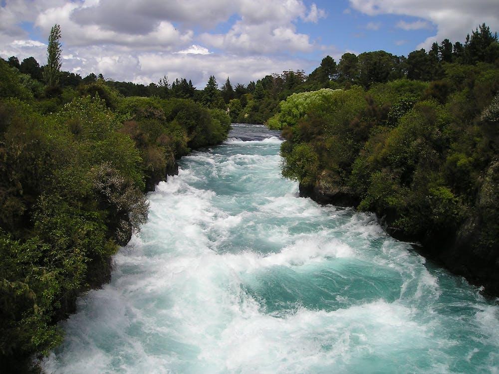 Rivière Entre Les Arbres