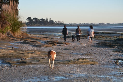 Free stock photo of beach, dogs, golden hour, Manukau Harbour