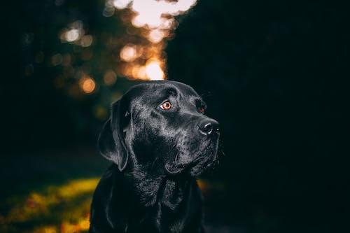 Безкоштовне стокове фото на тему «милий, собака, собачий, ссавець»