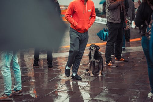 Free stock photo of dog, rain