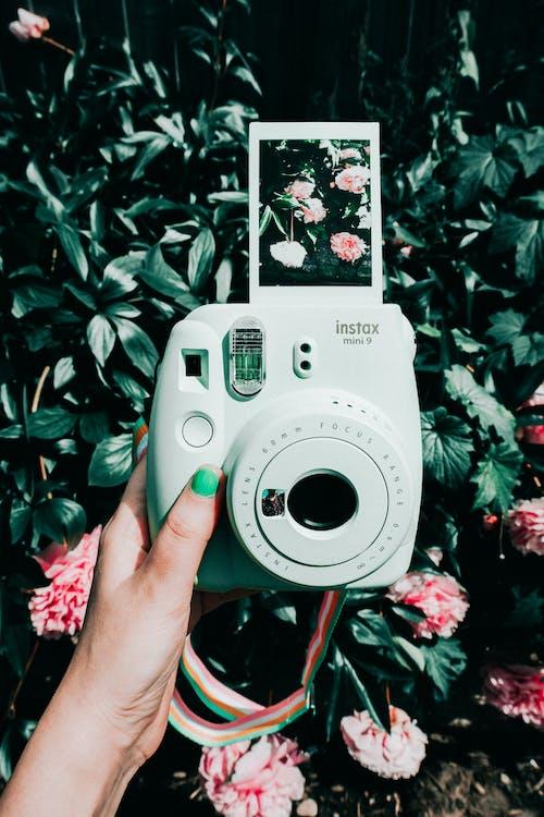 polaroid, κάμερα, στιγμιαία κάμερα