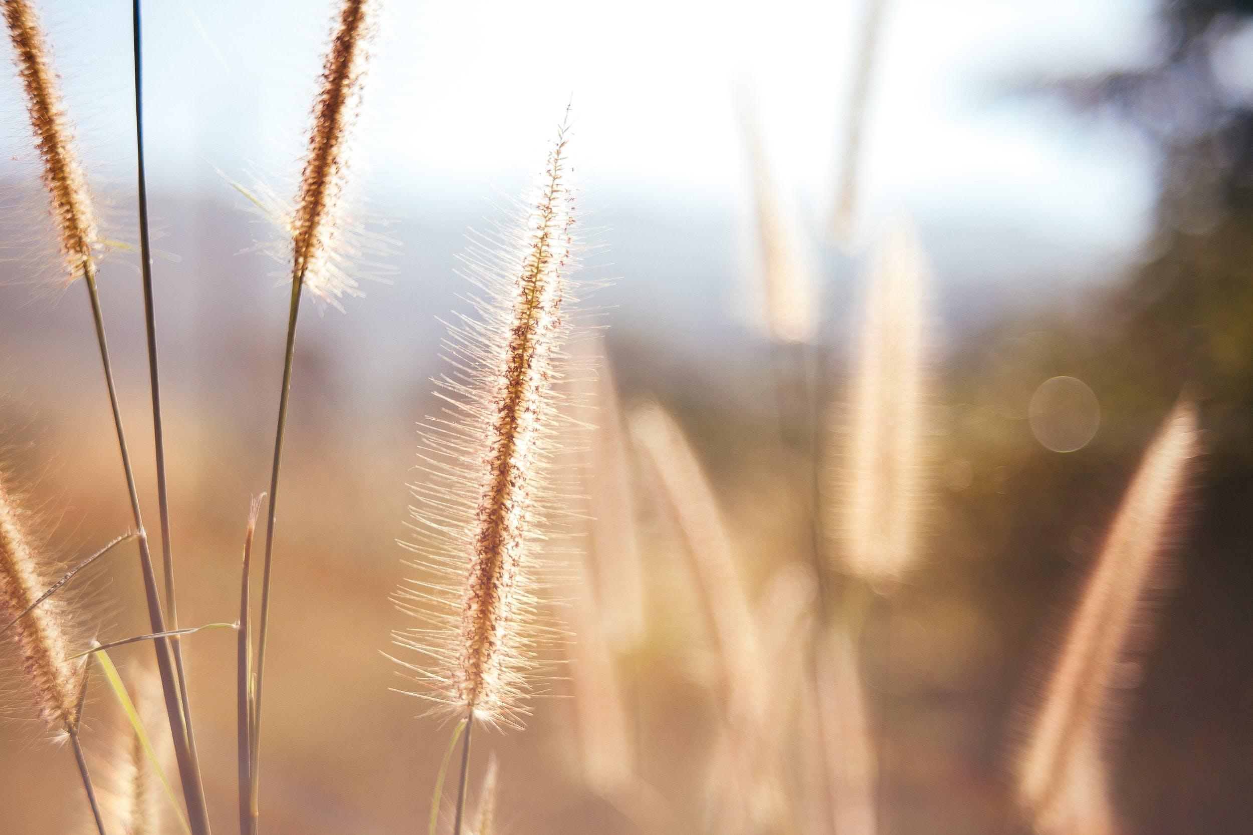 Free stock photo of desktop wallpaper, flower wallpaper, grass, natue