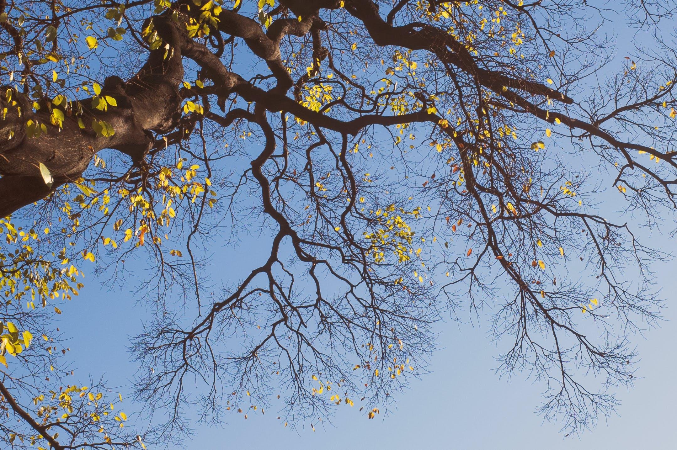Kostenloses Stock Foto zu baum, blauer himmel, herbst farbe